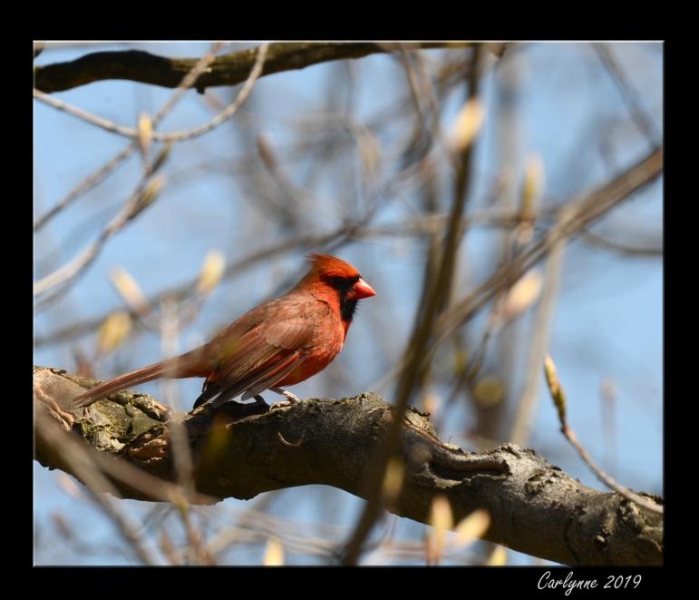 Cardinal - Where is everyone?