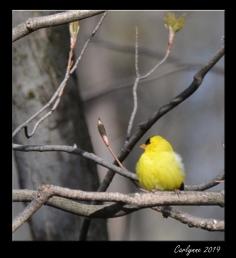 Chickadee - Just enjoying this beautiful day
